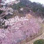 たかうね桜の森公園
