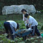 一輪車で収穫した野菜を運びます