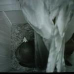 5/29巣作りを始めた